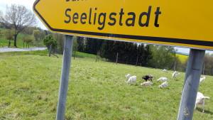 seeligstadt